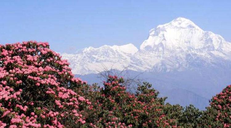 Mount Daulagiri